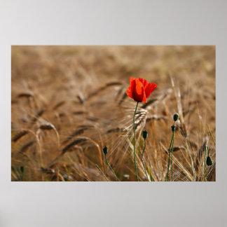 Poppy in a cornfield print