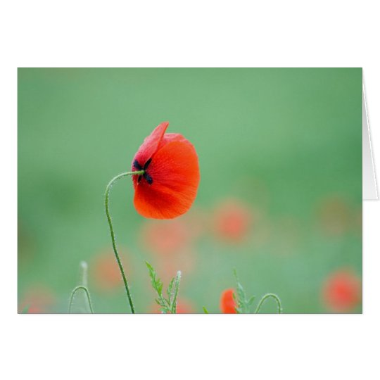 Poppy in Nidd Card
