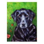 Poppy - Labrador Retriever Dog Art Postcard