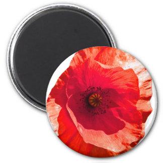 Poppy Fridge Magnet