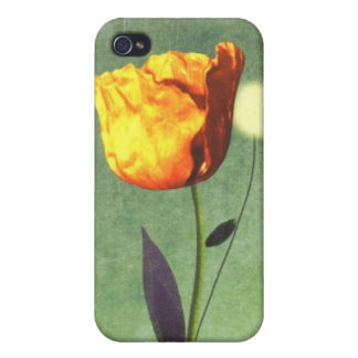 Poppy old styled vintage iphone 4/4S Case