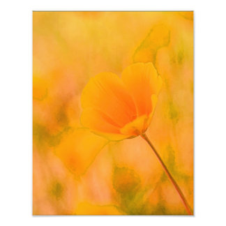 Poppy on a Golden Field Photograph