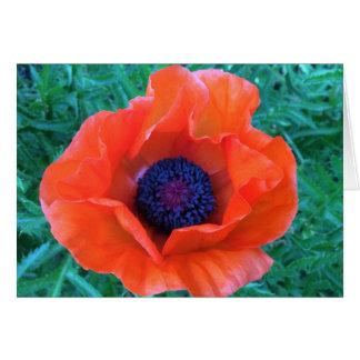 POPPY Oriental Red Orange --- Card