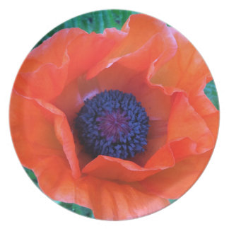 POPPY Oriental Red Orange --- Dinner Plate