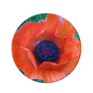 POPPY Oriental Red Orange --- Plate