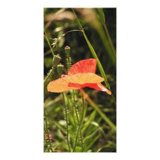 Poppy Photo Card