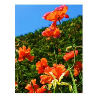 Poppy Photo Postcard