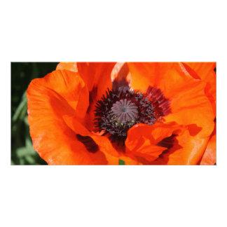 Poppy Photo Card Template