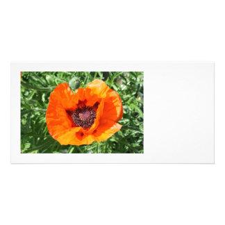 Poppy Personalized Photo Card