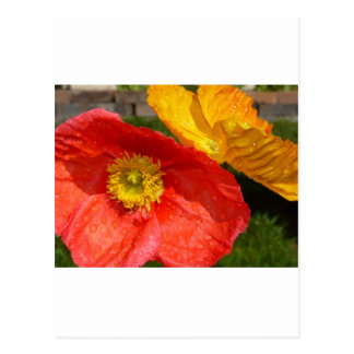 poppy,pink and yellow postcard