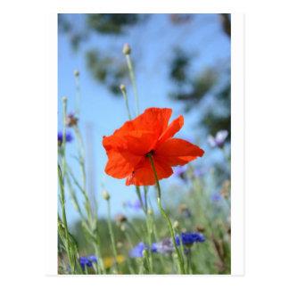 Poppy Post Card