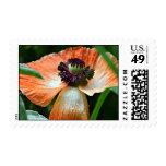 Poppy Postage Stamp