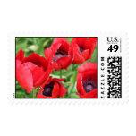 Poppy Postage Stamp 2