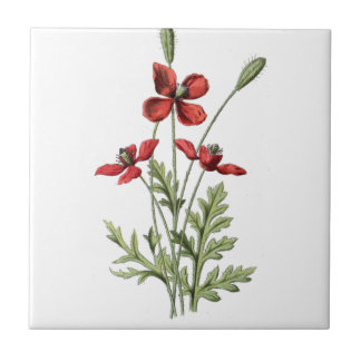 poppy save antique drawing botanical plate tile