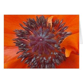 Poppy Seeds Card