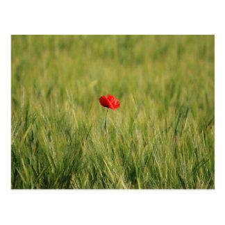 Poppy Single 1 Postcard