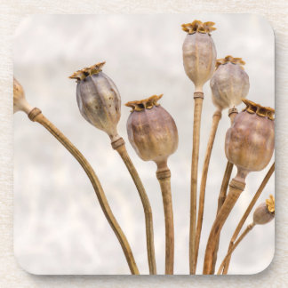 Poppy Straw Pods Beverage Coaster