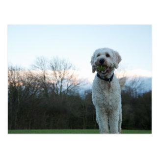 Poppy the labradoodle dog postcard