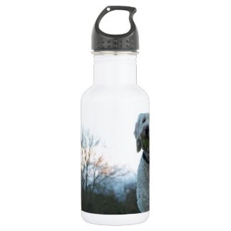 Poppy the labradoodle dog water bottle