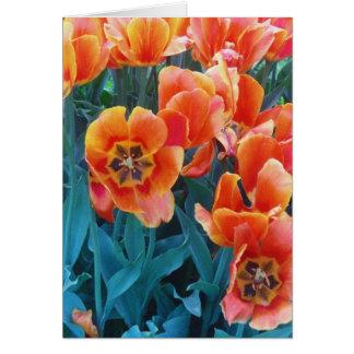 Poppy Tulips Greeting Card