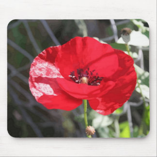 Poppy - Vector Style Mouse Pad