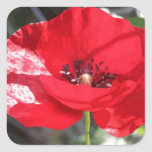 Poppy - Vector Style Square Stickers