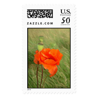 Poppy Watercolor   Postage Stamps