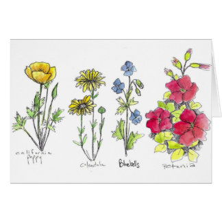 Poppy Wildflower Botanical Ink Drawing Watercolor Card