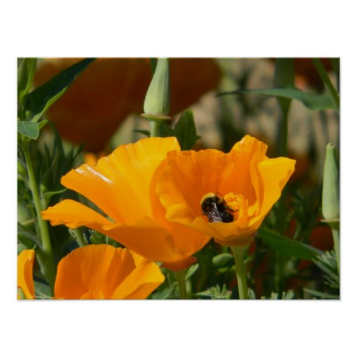 poppy with bumble poster