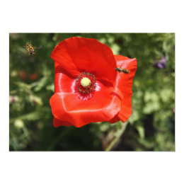 Poppy with Hover Flies Invitation