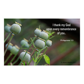 Poppy with Scriptural Text Posters