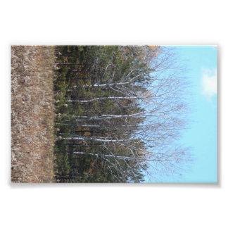 Por los árboles fotografías