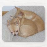 POR los perros de perrito lindos de la chihuahua M Tapetes De Ratones