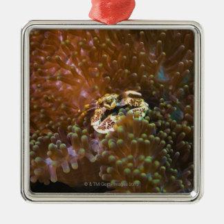 Porcelain crab in sea anemones, North Sulawesi Metal Ornament