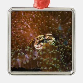 Porcelain crab in sea anemones North Sulawesi Christmas Tree Ornaments