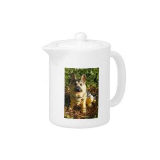 Porcelain Dog