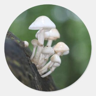 Porcelain fungus, Oudemansiella mucida Classic Round Sticker