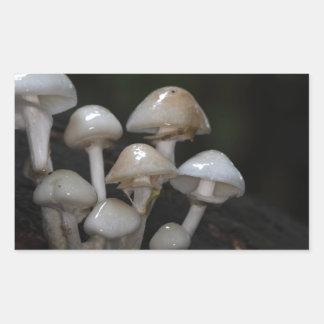 Porcelain fungus, Oudemansiella mucida Rectangular Sticker