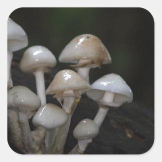 Porcelain fungus, Oudemansiella mucida Square Sticker
