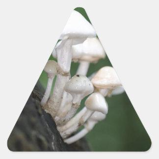 Porcelain fungus, Oudemansiella mucida Triangle Sticker