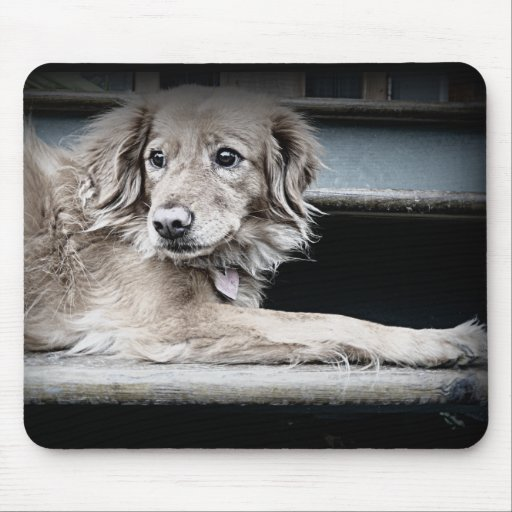 Porch Dog on Steps with Sad Eyes Mouse Pad