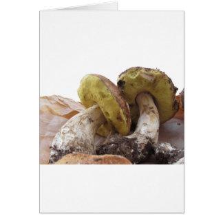 Porcini mushrooms isolated on white background card