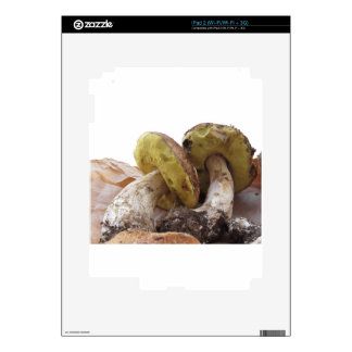 Porcini mushrooms isolated on white background decal for iPad 2