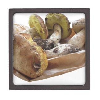 Porcini mushrooms isolated on white background jewelry box