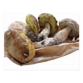 Porcini mushrooms isolated on white background postcard