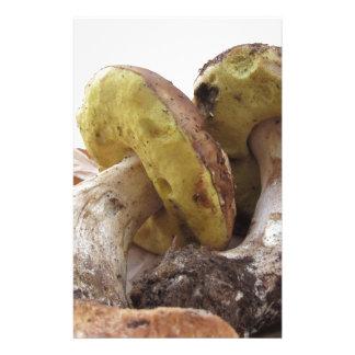 Porcini mushrooms isolated on white background stationery