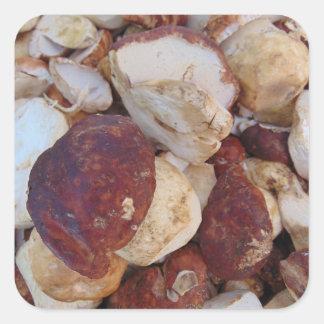 Porcini Mushrooms Square Sticker
