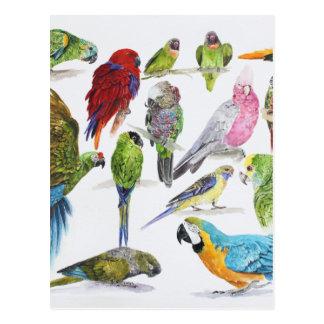 Porciones de diversos loros de regalos tarjeta postal