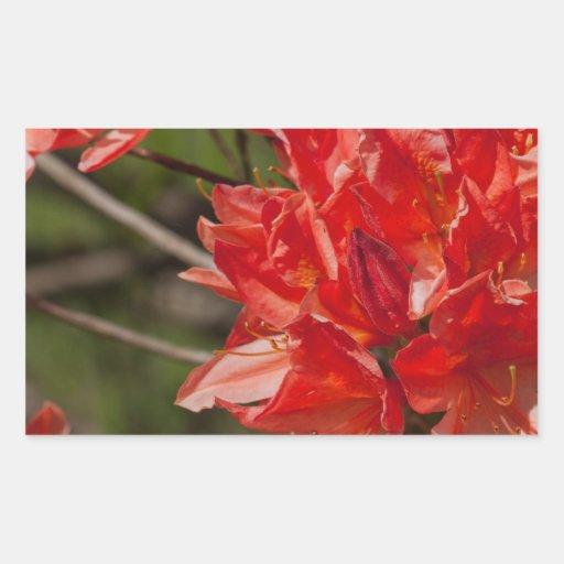 Porciones de flores rojas rectangular pegatina