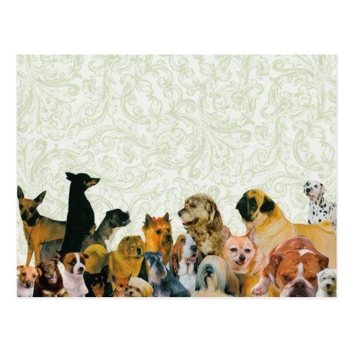 Porciones de poster del collage de los perros tarjeta postal